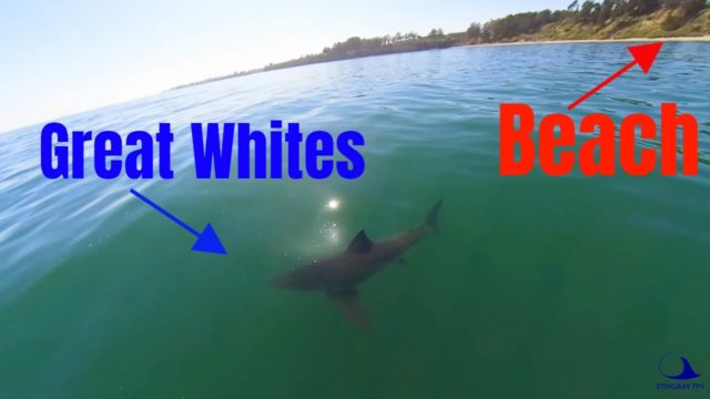 drone vs requin